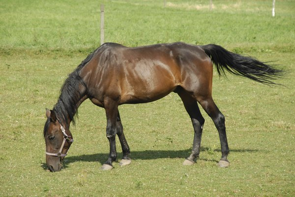 Horse grazes in Lancaster County pasture