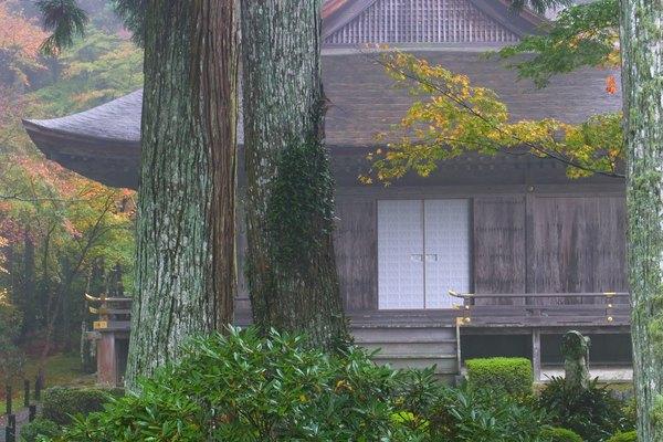 La tubería de drenaje puede estar obstruida con las raíces del árbol.