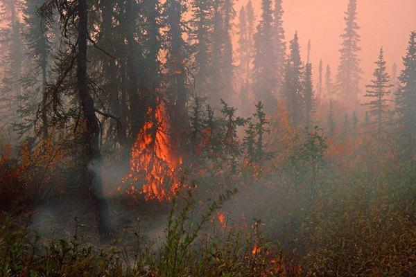 Imágenes de un incendio forestal.