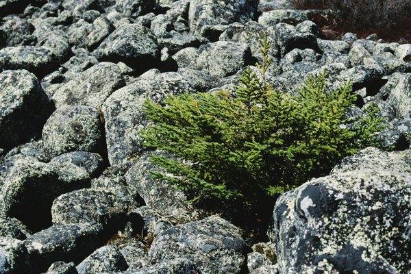 Pastos y líquenes son algunas de las plantas de la tundra.