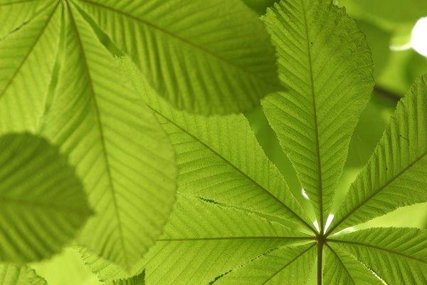 Introducción. Los experimentos con plantas enseñan las bases de la biología.