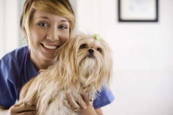 Los técnicos y asistentes veterinarios proporcionan apoyo a los animales bajo los cuidados de los veterinarios.