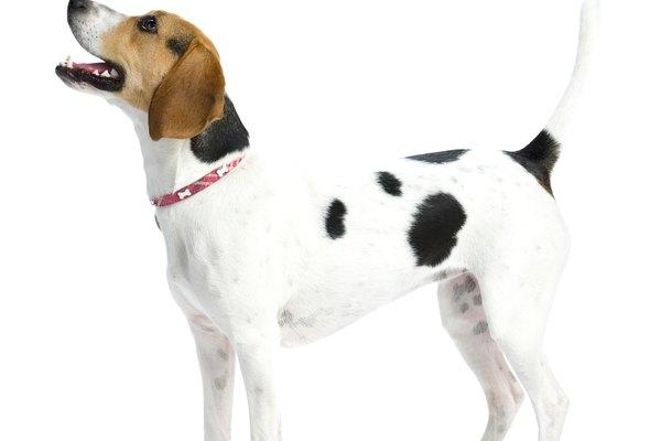 Esto sólo hará que su cuerpo crea que los cachorros se están amamantando y hará que produzca más leche.