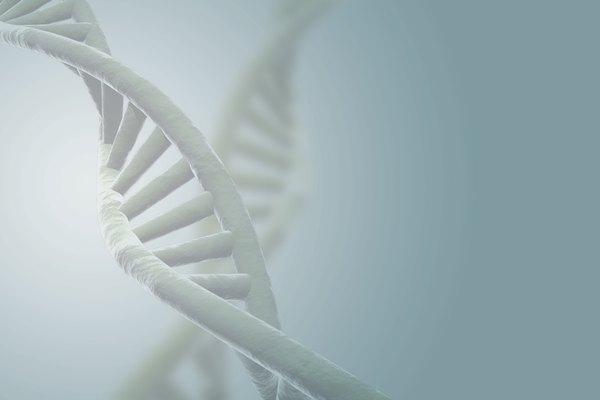 Las proteínas histónicas y no histónicas ayudan a controlar la estructura del ADN.