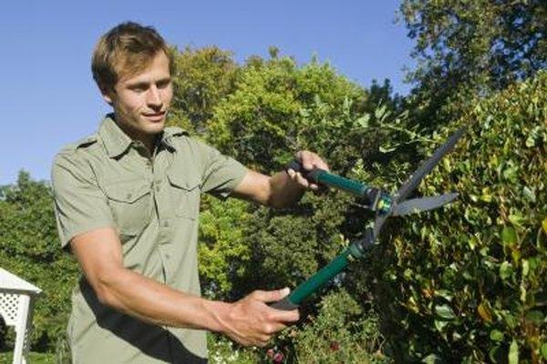Los servicios de paisajismo y de cuidado de césped son ejemplos de negocios cíclicos.