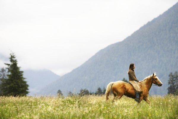 Los caballos son seres muy especiales.