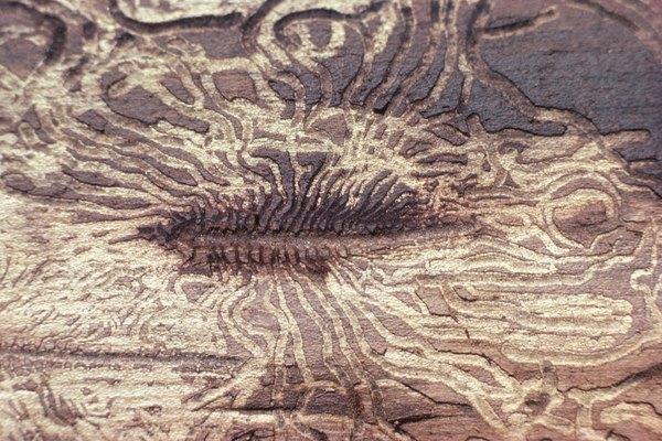 Las termitas destruyen la madera para habitarla cómodamente.