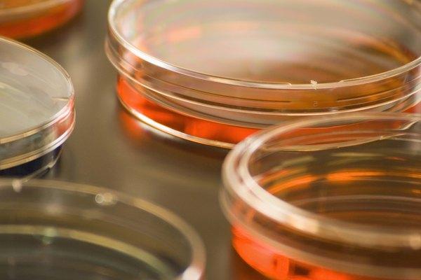 Esterilizar placas de Petri.