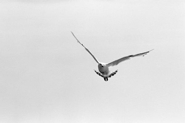 Reproduce un pájaro real creando un ave de juguete que mueva sus alas.