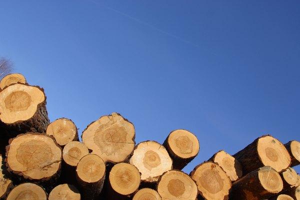 Selecciona una pieza de madera o una rama recta.