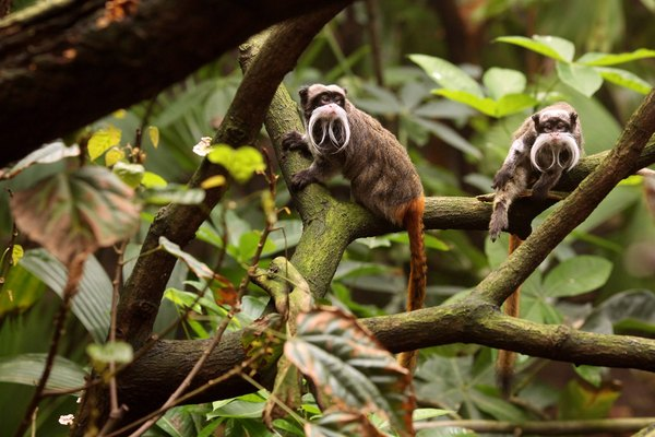 A New Living Rainforest Experience Is Launched At London Zoo