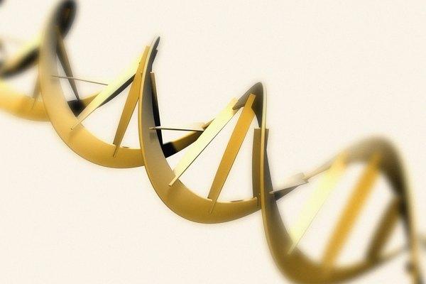 La doble hélice del ADN se une por base de pares y una columna de azúcar-fosfato.