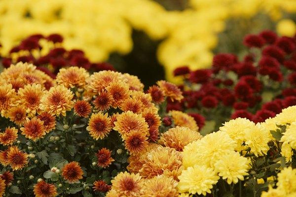 Existe una enorme variedad de especies de flores