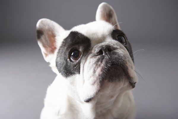 Una de las opciones de las razas de perros en