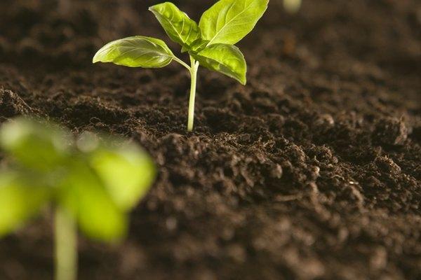 El exceso de cloro daña a las plantas.