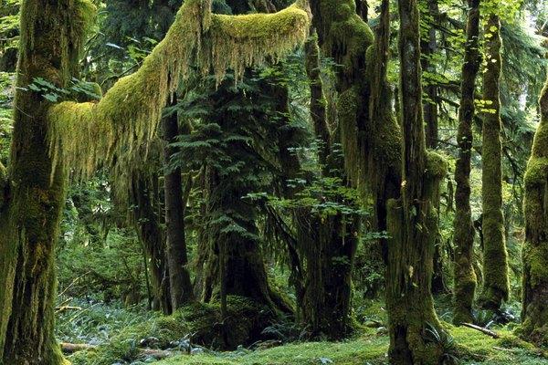 Los bosques pluviales reciben mucha más lluvia en el año que cualquier otro bioma.