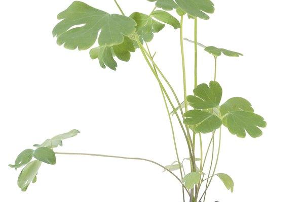 Puedes cultivar plantas en tu nueva bolsa.