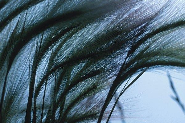 Una manga de viento, o cono de viento, es un tubo cónico de tela.
