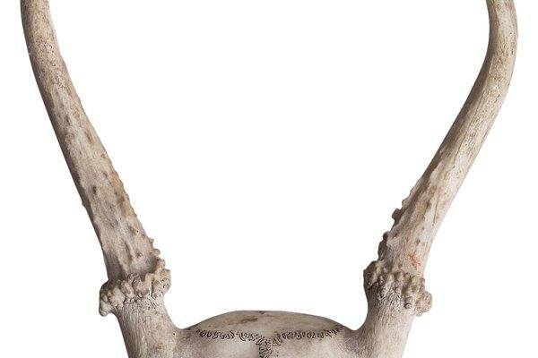 Es muy común personalizar un cuchillo de caza reemplazando su mango por un cuerno de ciervo.