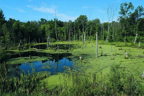 Los humedales son una parte importante del ecosistema.