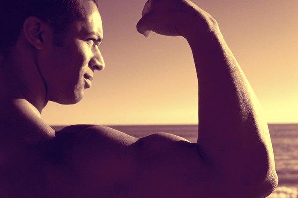 Los filamentos deslizantes permiten que el músculo se acorte de extremo a extremo.