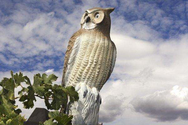 Coloca un elemento de disuasión de aves, como una estatua de búho, al lado de donde alimentas a tu perro.