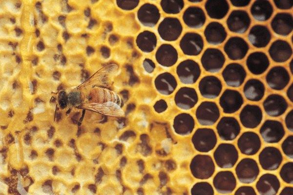 Empezar una granja de abejas de miel.