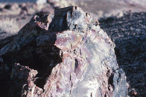 La madera petrificada contiene diversos colores que provienen de los minerales que la componen.