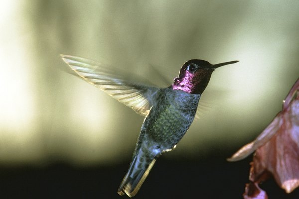 Fabrica un nido para ver de cerca la vida de los colibríes.