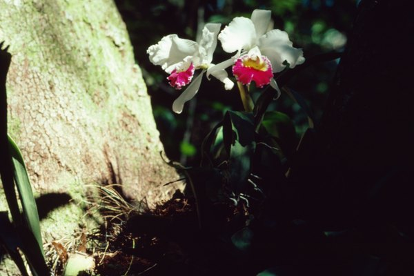 Las orquídeas están adaptadas a sus condiciones naturales, las cuales deben replicarse.