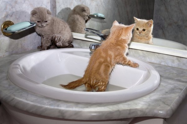 How To Use Lemon To Kill Fleas On Newborn Kittens Amp Cats