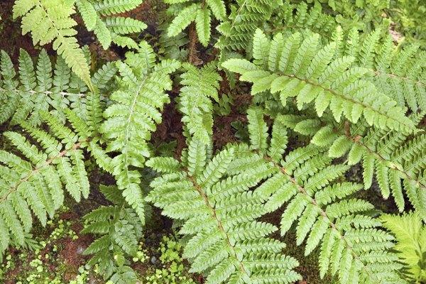 Los helechos y musgos ambos usan esporas para reproducirse.
