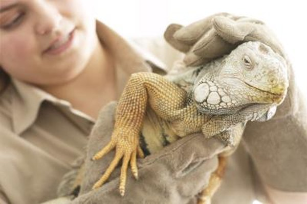 Incluso los pequeños zoológicos están sujetos a muchas regulaciones.
