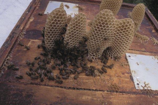 Utiliza cera de abejas para hacer crayones caseros que son seguros para los niños.