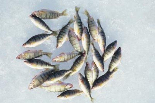 El pescado congelado suele retener sus cualidades durante más tiempo que la comida de mar fresca.