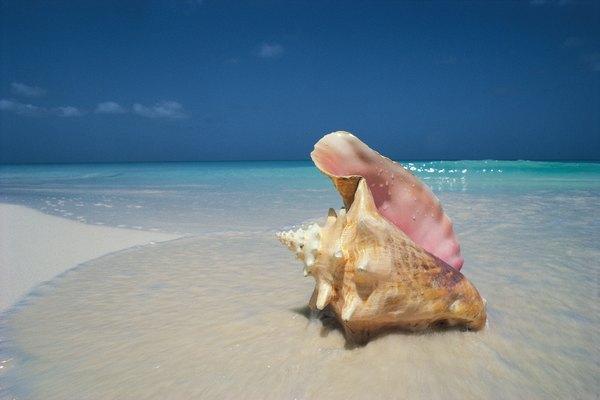 Las conchas marinas tiene mucho más significado del que piensas.