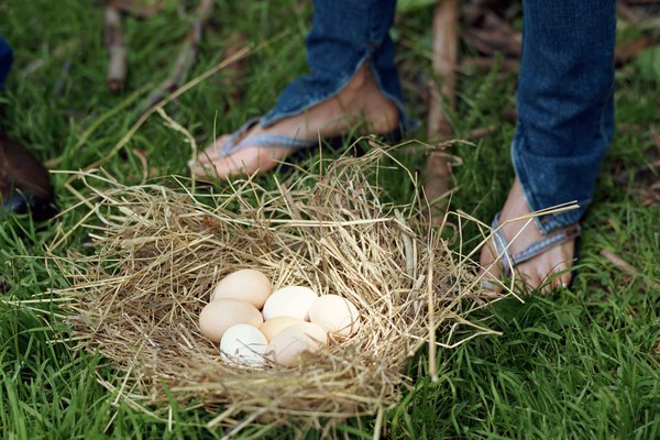 Person standing by nest with eggs