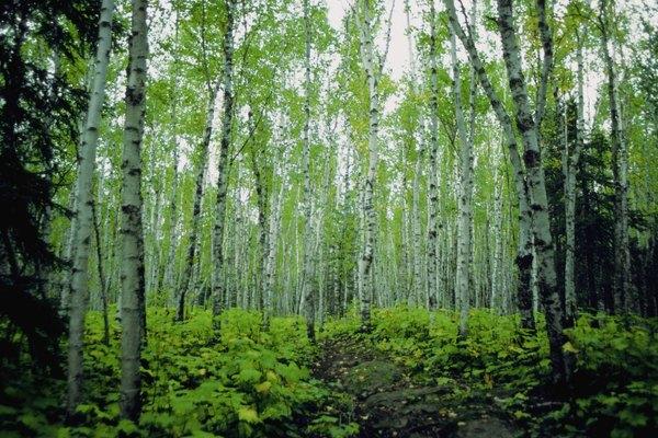 Bosque caducifolio.