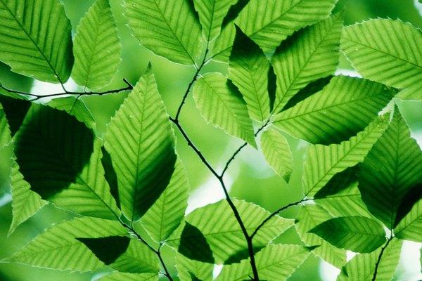 La fotosíntesis artificial imita el proceso de las plantas para almacenar la luz solar como energía química.