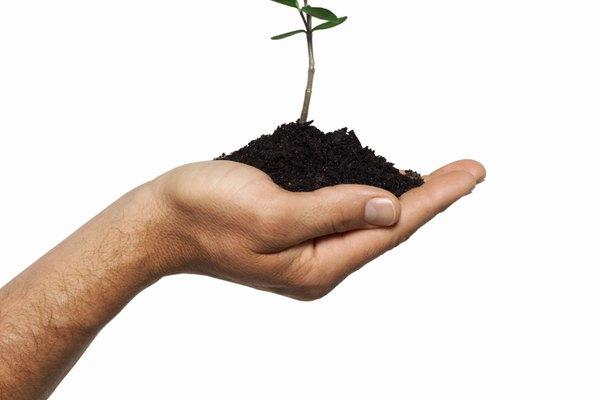 Fototropismo. Movimiento y crecimiento de las plantas por medio del sol.