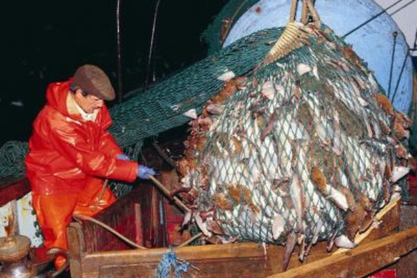 Los pescadores de mar adentro pueden ayudar a componer el equipo y procesar el pescado mientras están en el mar.