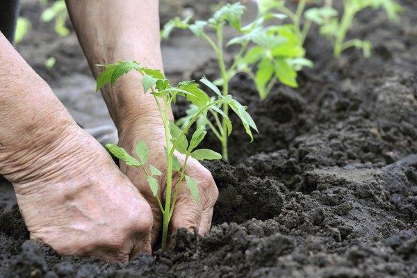 Los isótopos radiactivos se usan en la agricultura.
