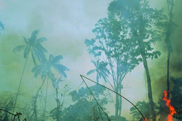 Los árboles y la vida salvaje de los bosques tropicales son víctimas de la deforestación.