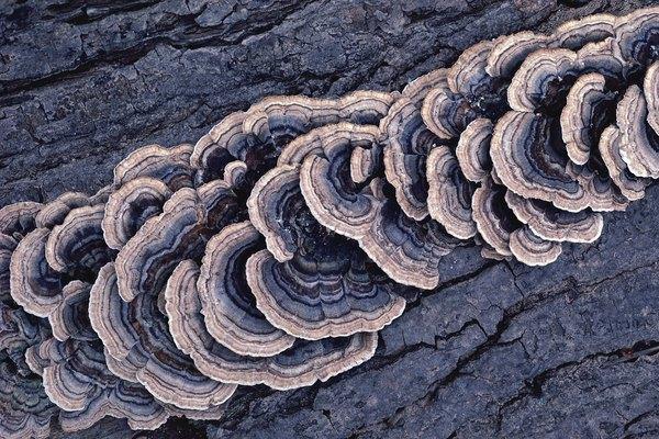 Fungus growing on bark