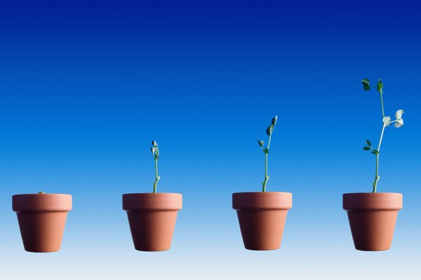 Crecimiento de plantas.
