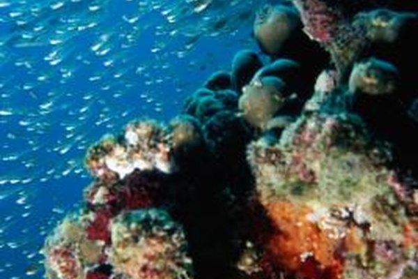 Los biólogos marinos pueden especializarse en plancton, peces o plantas submarinas.