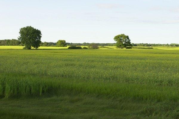 Las praderas con pasturas son comunes en las amplias llanuras costeras.