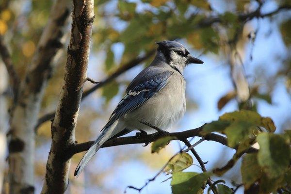 Un ave en el bosque caducifolio.