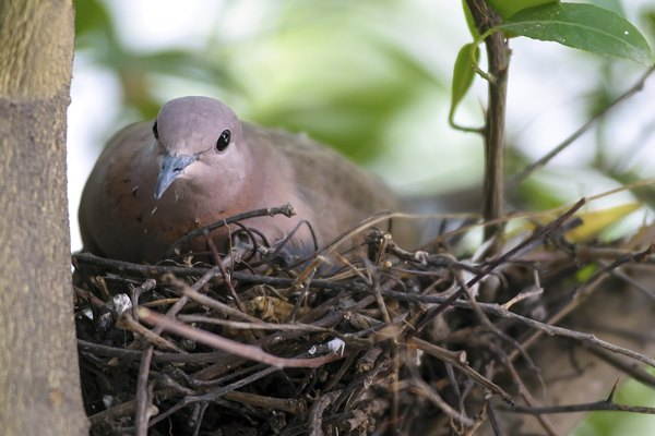 In my Nest