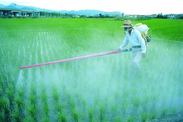 El Nitrógeno es vital para el crecimiento de las plantas.